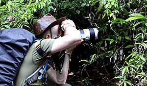 Brazilian Rainforest Tours