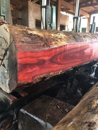 Bloodwood Rare Earth Hardwoods