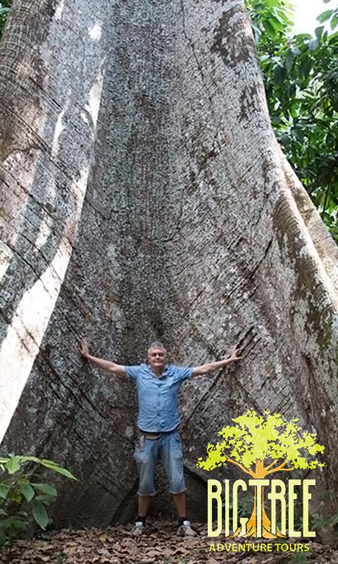 Big Tree Adventure Tours